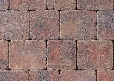 Tegula---Heather-